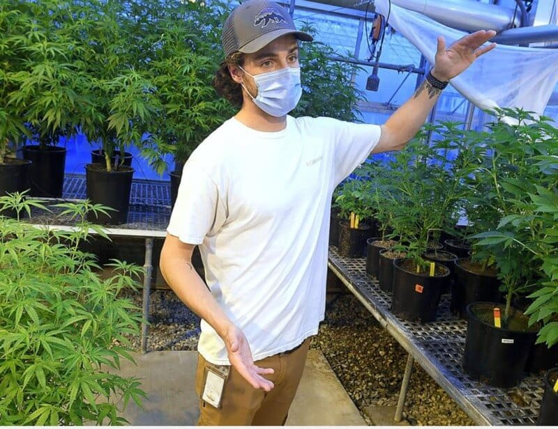 USC grad student debunks hemp growing myths