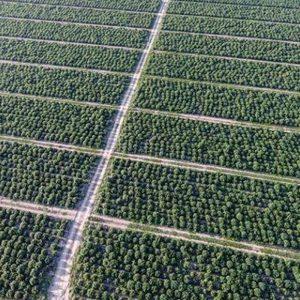 Hemp Industry News Nov 16, 2020 - CBD Healing America's Anxiety USDA Validates International Hemp Hemp Farming Fights Climate Change New York Clarifies CBD Regulations $6 Million Michigan Hemp Development